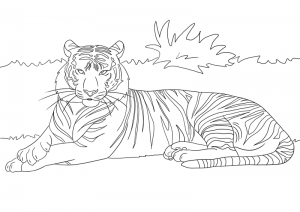 Preview of your coloring-tiger