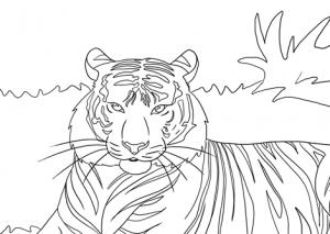 tiger-coloring-page header